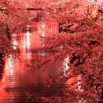 東京の夜桜スポット!おすすめのデートスポットTOP5!