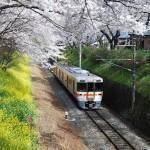東京の桜の名所ランキング!子連れにおすすめTOP5!