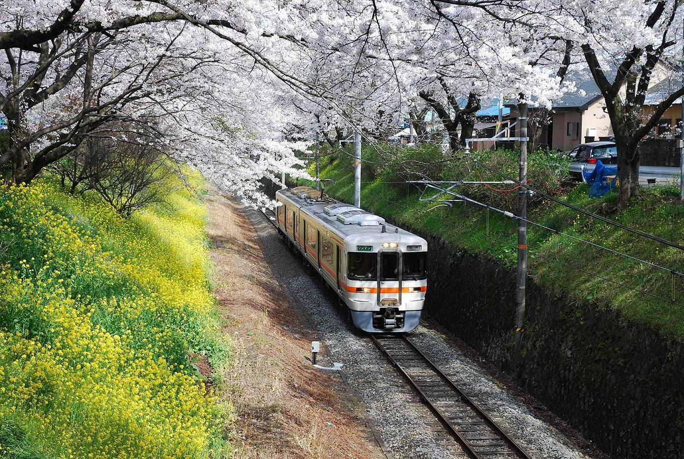 東京の桜の名所ランキング!子連れにおすすめTOP5! | イクメン ...