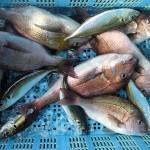 海上釣り堀!東京から子供も初心者も楽しめるおすすめはココ!