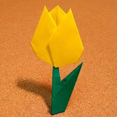 tulip2_25