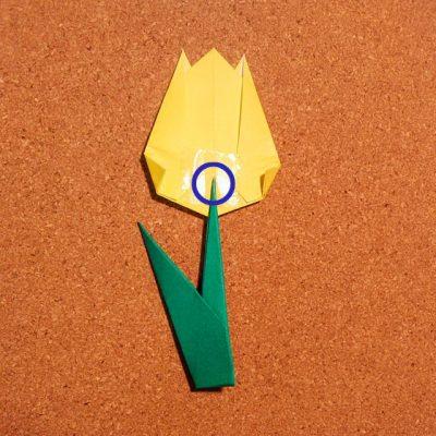 tulip2_24