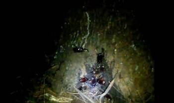 カブトムシ採集